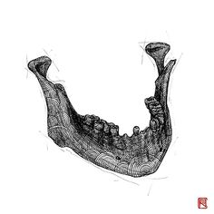 -Jaw- from Human Body Study Series by Body Study, Human Body, Anastasia, Anatomy, Bones, Body Art, Contemporary Art, Around The Worlds, Skull