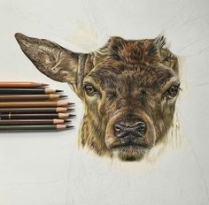Learning to Draw? You're Gonna Need a Pencil - Drawing On Demand Cool Pencil Drawings, Colored Pencil Artwork, Pencil Drawing Tutorials, Art Drawings Sketches Simple, Coloured Pencils, Color Pencil Art, Animal Drawings, Colored Pencil Tutorial, Colored Pencil Techniques
