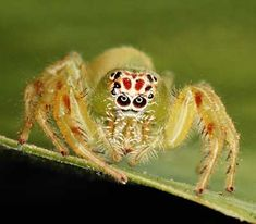 """HowStuffWorks """"Arachnid Pictures"""""""