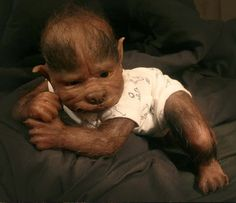 werewolf babies dolls | After all, as the saying goes, you get what you pay for.