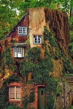 Weird Houses People do live in...the house that grew out of a redwood tree (or Sequoia?)