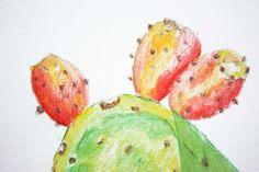 Cactus Fig - Watercolor pencil sketch - YouTube