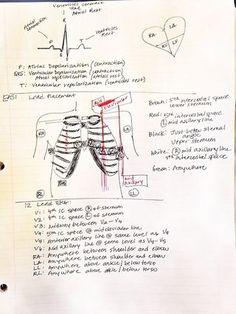 Normal flow of heart & lungs | Life after Nclex-RN | Bloglovin'