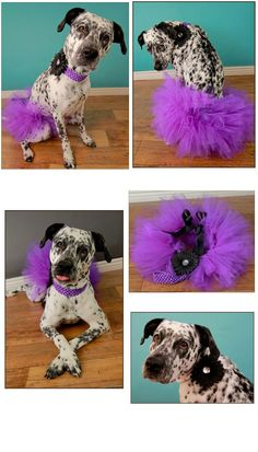 dog tutu, for fleabag but in mint or seafoam Big Dogs, Dogs And Puppies, Doggies, Dog Tutu, Purple Tutu, Pet Costumes, Costume Ideas, Halloween Costumes, Girl And Dog