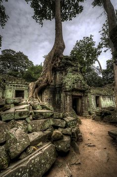 Tree taking over ruins of building inside Ta Prohm temple complex, Angkor Wat, Cambodia.