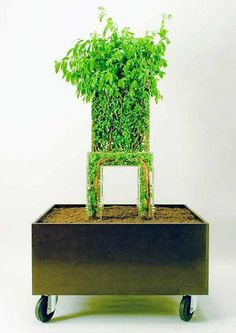 Michel Bussien's The Growing Tree Chair