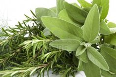 Hierbas-medicinales-para-el-hogar