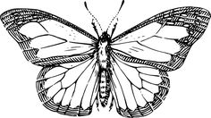 Butterfly, Wings, Insect, Antenna