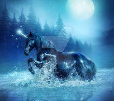 black_beauty_by_enchantedwhispers