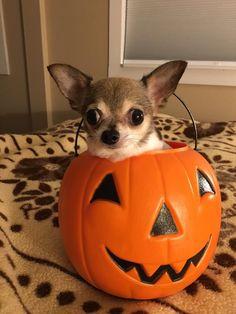 Happy Halloween...🐾