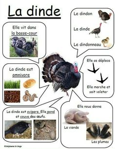 Nature Animals - Welcome my homepage Nature Animals, Animals For Kids, Farm Animals, Animals And Pets, How To Speak French, Learn French, Animal Activities, Activities For Kids, Core French