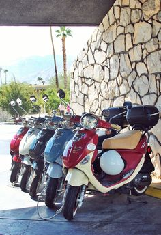 Palm trees and sunshine, ready for a weekend ride with friends. #Buddy