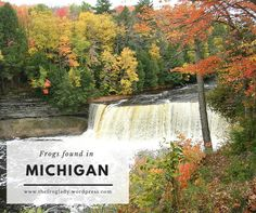 Learn about the frogs and toads from Michigan! Frog Facts, Frog And Toad, Michigan, Waterfall, Frogs, Nature, Wordpress, Travel, Outdoor