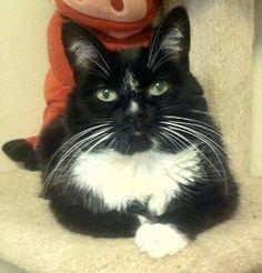 My cat Dot. Lynn, Pahrump, Nevada. 8/7/13