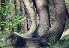Posts about crooked forest written by Alyson Strike Crooked Forest, Go Green, Shades Of Green, Poland