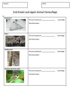 Students create a comic about animal camouflage with images and research information. Computer Lab Lessons, Technology Lessons, Science Lessons, Computer Class, Science Ideas, Animal Worksheets, Science Worksheets, Worksheets For Kids, Create A Comic