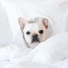 When it's so cold all you want to do is put on some skin care and curl up in bed all day ❄ Korean Beauty Store, Dorm Life, Dorm Decorations, Dorm Room, Puppy Love, Cat Lovers, French Bulldog, Dog Cat, Puppies
