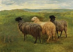 Rosa Bonheur  Sheep on Meadow