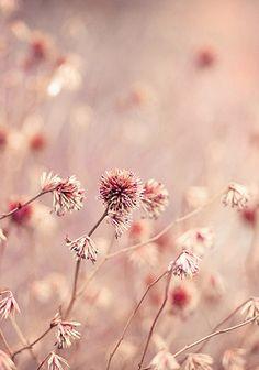 Colour inspiration   dusky pink   dusky pink bridesmaid dresses…