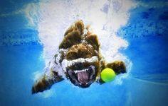 Underwater Dog Photography 2