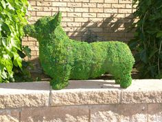 Must make Corgi topiary!