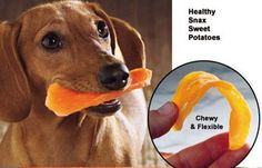 Free Printable Dog Vaccination Record Free Printable Pet
