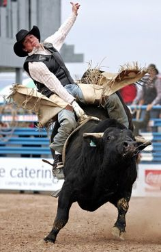 Bull Riding - ..
