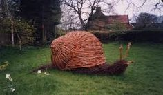 Image result for willow snail