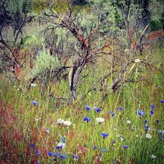 #wildflowers #highdesert #hiking #nature #elements #landscape #photography #camelsbacktrails #Boise #Idaho #UnitedStates by gravityanne
