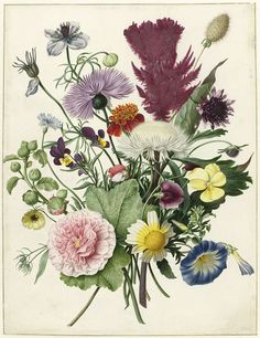 This exquisitely rendered ensemble looks like a just picked field bouquet, but it combines flowers found in the wild, like the violet and the cornflower, with cultivated exotic species, like the red woolflower (Celosia) at the upper right. They do not all bloom at the same time. The blue and white morning glory blossoms in the spring, and the dark purple field scabious only from August.