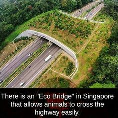 Animals can cross the highways without being killed. A beautiful idea!!