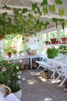Vad händer i vårt växthus just nu tro? - Julia K - Metro Mode Backyard Greenhouse, Backyard Retreat, Balcony Gardening, Outdoor Rooms, Outdoor Living, Outdoor Decor, Garden Cottage, Home And Garden, Shed Interior