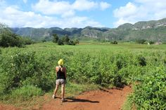 #cuba #vinales #mogote Cuba Vinales, Mountains, Nature, Travel, Havana, Naturaleza, Viajes, Destinations, Traveling