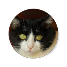 Cat Round Stickers