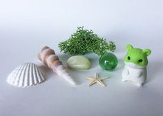 Green Hamster TK Expansion Pack by TerrariumKits on Etsy Terrarium Kits, Air Plant Terrarium, Glass Marbles, Plastic Containers, The Expanse, Sea Shells, Packing, Green, Etsy