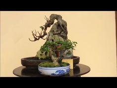 Top những tác phẩm bonsai mini việt nam đẹp, Tác phẩm cây khế bonsai min... Bonsai Art, Minis, Fountain, Outdoor Decor, Plants, Water Fountains, Plant, Planets