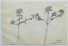 "© Archivo Patrizia Antonicelli Selezione ""Sardegna"" Leaf Tattoos, Filing Cabinets"