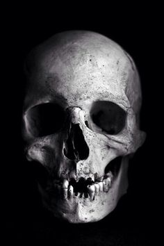 c9b9bd3ce3bfdcedc28f5c4317768b4a--skull-reference-free-photoshop.jpg (426×640)