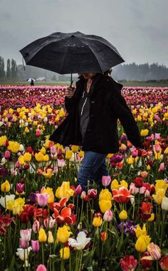 Skagit Valley, WA -  trip to the tulip farms of the Pacific Northwest to the bucket list