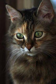 magical-meow: Ginger Steve Evans - GAPATIPITOPO