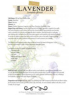 Flying the Hedge: Herbarium: Lavender Magic Herbs, Herbal Magic, Healing Herbs, Medicinal Plants, Ayurvedic Herbs, Witch Herbs, Illustration Botanique, Practical Magic, Book Of Shadows
