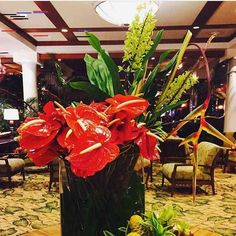 #melekalikimaka #merrychristmas #outriggerwaikiki #outrigger #hotel #wishyouamerrychristmas #toyall #hohoho #christmas #everydaysmile #everydayhappy #holidayseason #joytotheworld #worldpeace #anthurium #hawaiistagram #waikiki #honolulu #oahu #hawaii #aloha