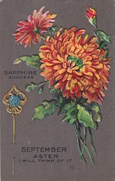 September - Aster - Sapphire - antique vintage postcard
