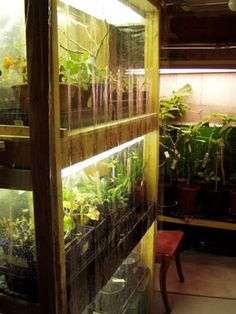 Greenhouses on pinterest greenhouses old windows and for How to make a small indoor greenhouse