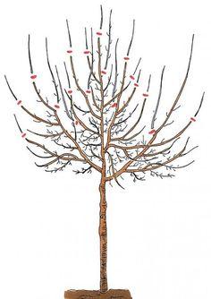 Cut the plum tree correctly - Pflaumenbaum richtig schneiden Cut the plum tree Backyard Plants, Backyard Garden Design, Small Garden Design, Landscaping Plants, Plant Design, Garden Plants, Bonsai Garden, Garden Trees, Cut Garden