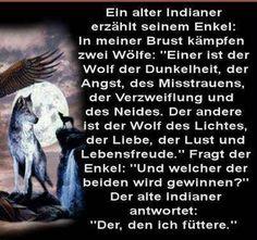 Der Kampf der zwei Wölfe                                                       …