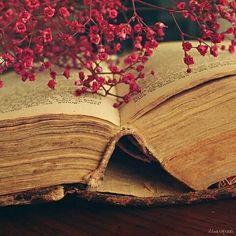 Kitaplar Benim Beynim Kalbim: Kitaplarim