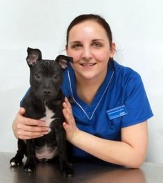 PDSA saves puppy poisoned by chocolate! Kofhii was adopted by her new owner, Avril Chamberlain and her children last year. Her ordeal began when she was just four-months-old and got her paws on a box of chocolates, which were a left over gift, while the family were out.