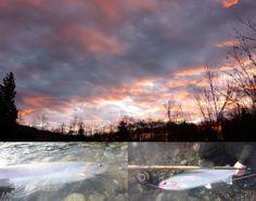 Skeena River Steelhead fishing at the Deep Creek Lodge, Terrace,British Columbia Canada Steelhead Flies, British Columbia, Fly Fishing, Terrace, Pride, Canada, Clouds, Deep, World