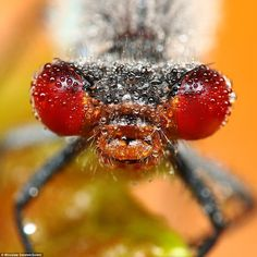 Macro Insect Photography by Igor Siwanowicz & Miroslaw Swietek | Cool Things Collection | Showcasing All That's Cool